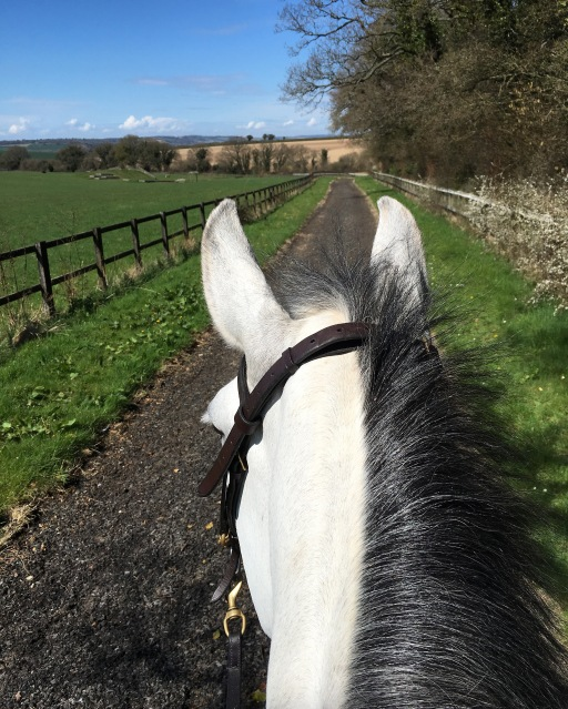 Out on the gallops doing fitness work
