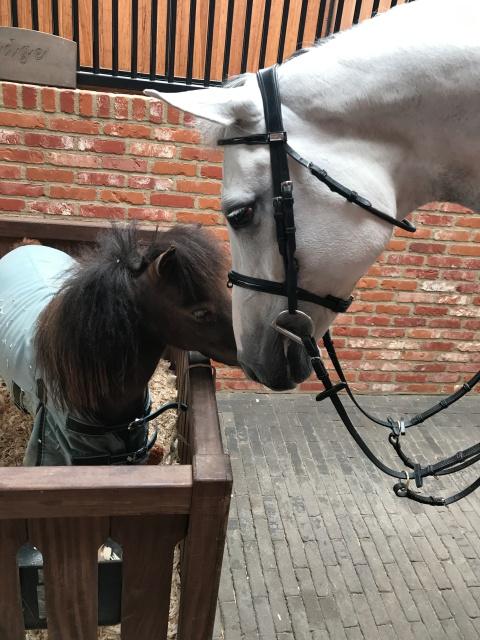 Cappi meeting Nidge at Ashford Farm stables